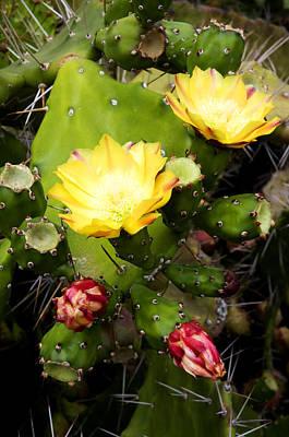 Yellow Cactus Flower Photograph - Opuntia Ficus-indica by Fabrizio Troiani