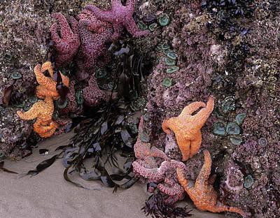 Or, Oregon Coast, Bandon, Ochre Sea Art Print
