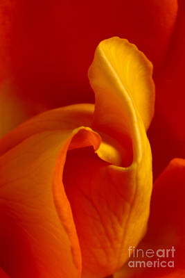 Photograph - Orange Abstract #1 by Art Barker