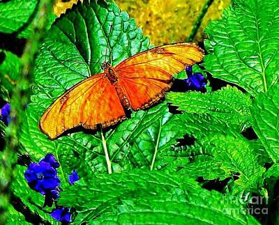 Photograph - Orange And Gold Butterfly by Janette Boyd