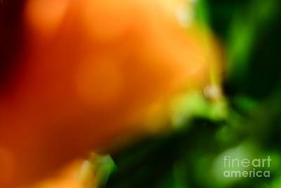 Orange And Green  Art Print by Bobby Mandal