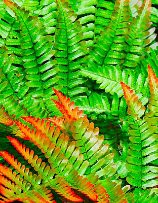 Digital Art - Orange And Green Ferns by Kara  Stewart