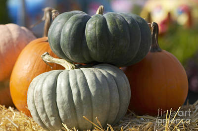 Photograph - Orange And Green Pumpkins by Sharon Talson