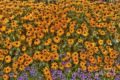 Art Print featuring the photograph Orange And Purple Daises by Jim Lepard