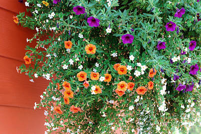 Abstract Male Faces - Orange and Purple Petunias by Connie Fox