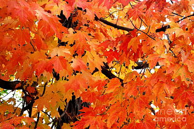Photograph - Orange And Reds And Some Yellow Too by Eunice Miller