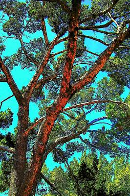 Art Print featuring the photograph Orange And Turquoise  by Jodie Marie Anne Richardson Traugott          aka jm-ART