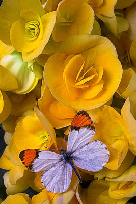 Begonias Photograph - Orange And White Butterfly by Garry Gay