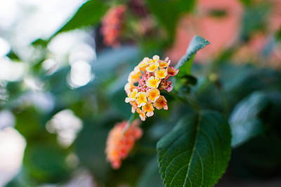 Photograph - Orange And White Flowers by Nathan Hillis