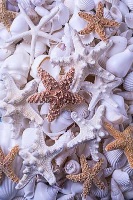 Orange And White Starfish Art Print by Garry Gay