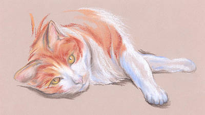 Orange And White Tabby Cat With Gold Eyes Art Print