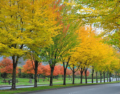 Orange And Yellow Boulevard Print by Kirt Tisdale