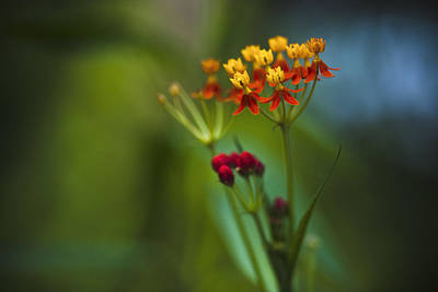 Photograph - Orange And Yellow Flowers by Bradley R Youngberg