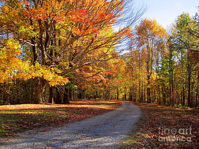 Photograph - Orange And Yellow Leaves Along A Dirt Road by Cynthia  Clark