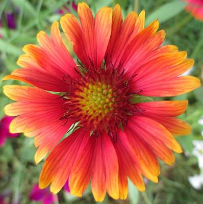 Photograph - Orange And Yellow Wildflower by Barbara Yearty