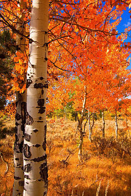 Art Print featuring the photograph Orange Aspens by Aaron Whittemore
