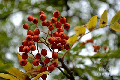 Art Print featuring the photograph Orange Autumn Berries by Scott Lyons