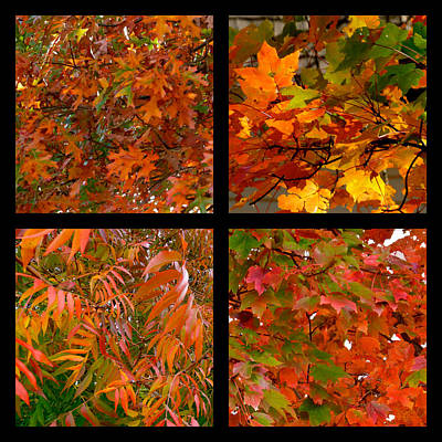 Photograph - Orange Autumn Leaves Collage by Jean Wright