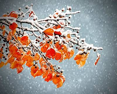 Print featuring the photograph Orange Autumn Leaves In Snow by Tracie Kaska