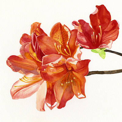 Azalea Painting - Orange Azalea Square Design by Sharon Freeman