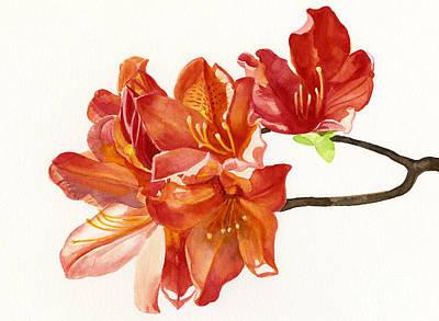 Orange Azaleas Art Print by Sharon Freeman