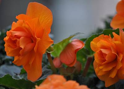 Orange Beauties Art Print