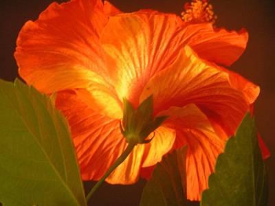 Venice Beach Bungalow - Orange beauty by Annika Farmer