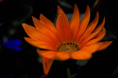 Photograph - Orange Beauty by Cherie Duran