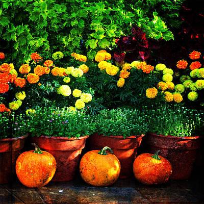 Photograph - Orange Beauty by Randi Grace Nilsberg