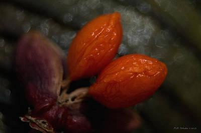 Photograph - Orange Berries by WB Johnston
