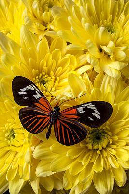 Pom Photograph - Orange Black Butterfly by Garry Gay