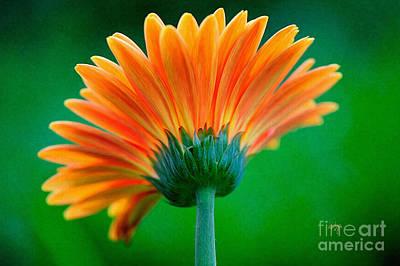 Photograph - Orange Blast by Lois Bryan