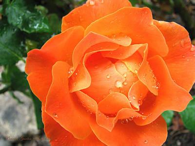 Art Print featuring the photograph Orange Blossom Special by Brooks Garten Hauschild