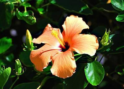 Photograph - Orange Blossom Special by Linda Cox