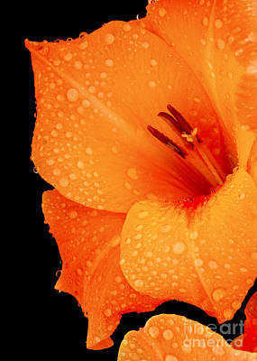 Photograph - Orange Blossom Special by Paul W Faust -  Impressions of Light