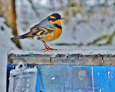 Photograph - Orange Blue And Sleet by VLee Watson