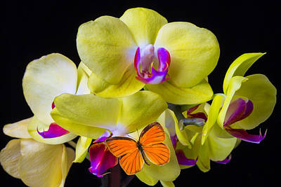 Orange Butterfly And Yellow Orchids Print by Garry Gay