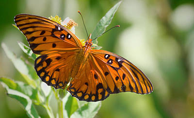 Photograph - Orange Butterfly by Dorothy Cunningham
