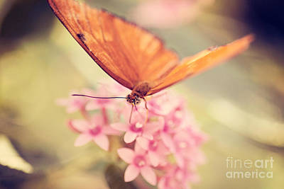 Orange Butterfly Art Print by Erin Johnson