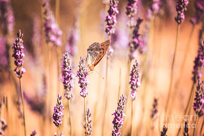 Lavender Photograph - Orange Butterfly II by Matteo Colombo