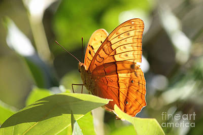 Orange Butterfly Art Print by Jola Martysz