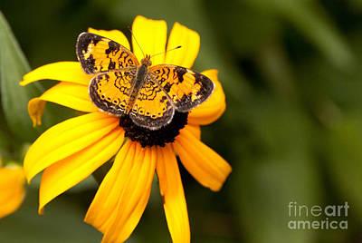 Orange Butterfly Art Print by Lena Auxier