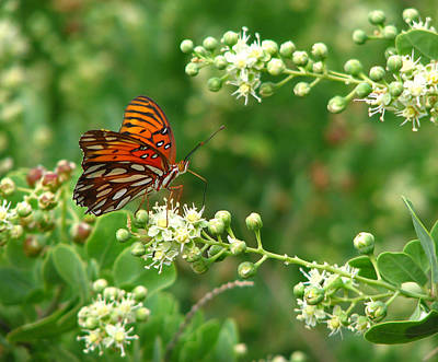 Art Print featuring the photograph Orange Butterfly by Marcia Socolik