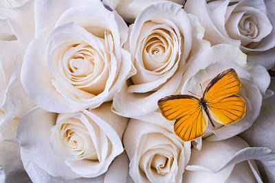 Miniature Photograph - Orange Butterfly On White Roses by Garry Gay