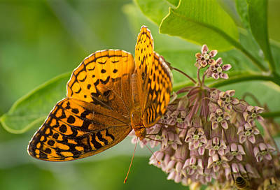 Photograph - Orange Butterfly4 by Rima Biswas