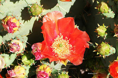 Photograph - Orange Cactus Bloom by Dick Botkin