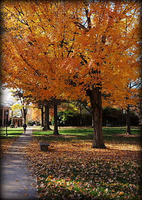 Photograph - Orange Canopy - Davidson College by Paulette B Wright