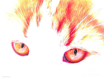 Photograph - Orange Cat Eyes by Anita Lewis
