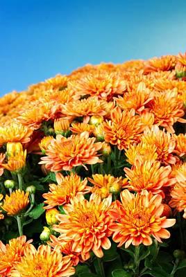 Orange Chyrsanthemum Art Print