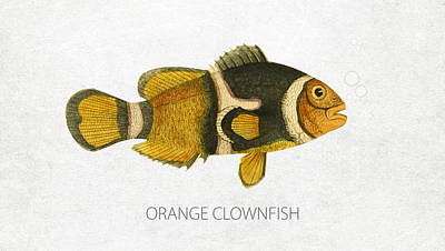 Orange Clownfish Art Print by Aged Pixel